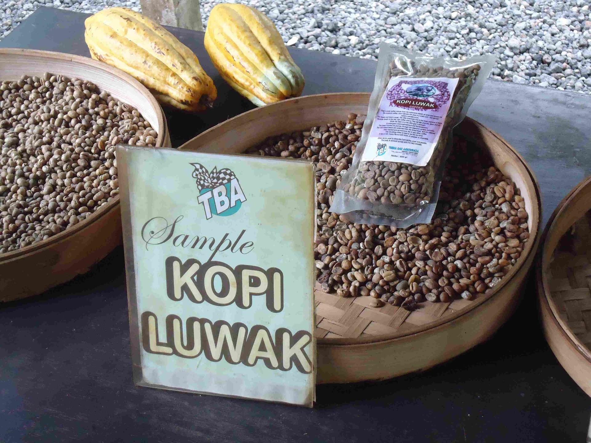 mon cher cafe mangouste kopi luwak
