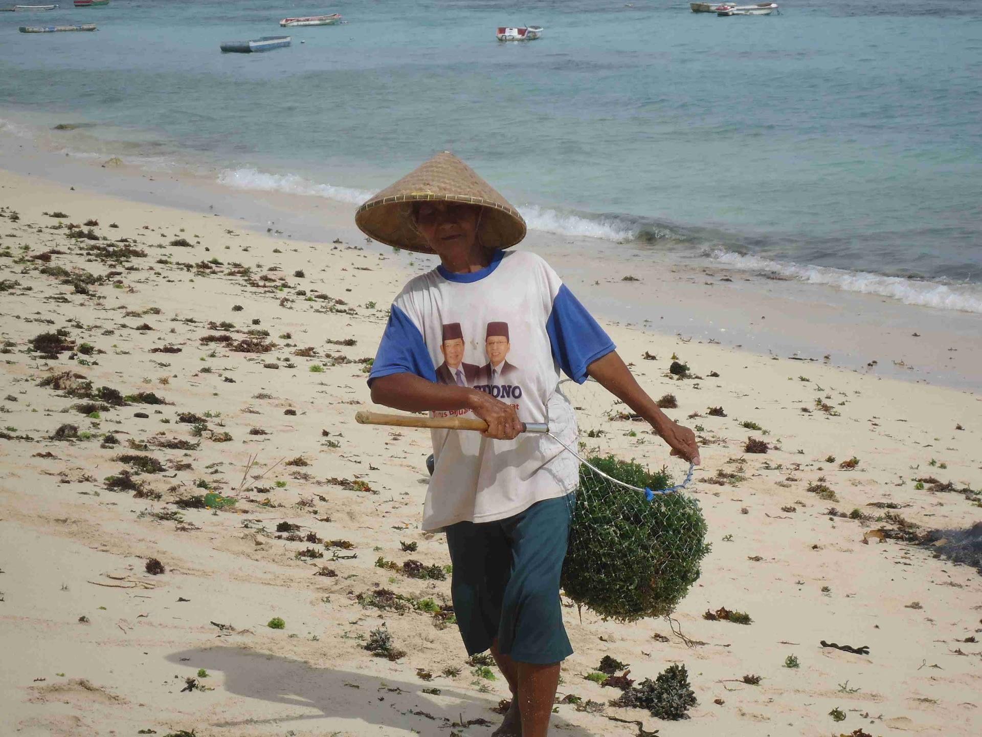 ramasseur algue