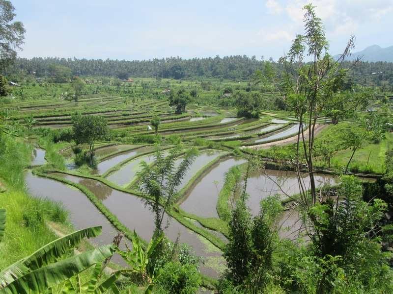 riziere de tirtagangga