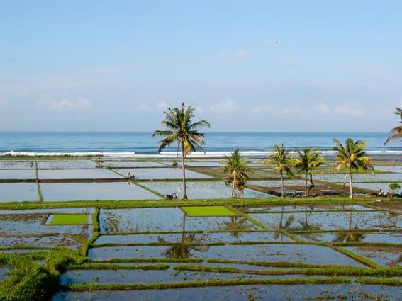 Bali357